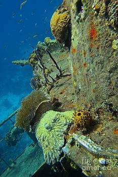 JohN Malone Halifax Photographer - Coral Growth on a Ship Wreck