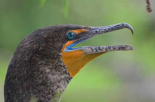 Cormorant Close Up by Jodi Terracina