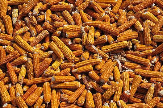 Corn cobs by Henrique Souto