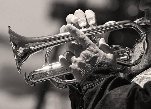 James BO  Insogna - Cornet in Sepia