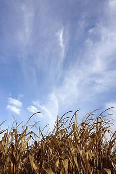 Cornfield Sky by Daniel Kasztelan