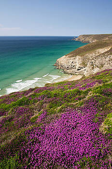 Cornish headland with Heather by Pete Hemington