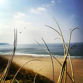 Cornish marram Grass by Henry  Turner