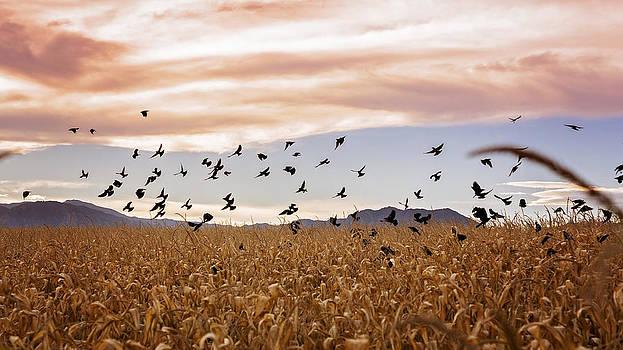 Cornstalks and Crows by Linda Storm