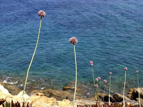 Corsica by Daniela Nedelea