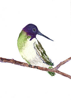 Costa Hummer by Renee Chastant