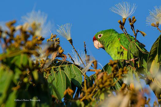 Costa Rica Green by Sheen Watkins