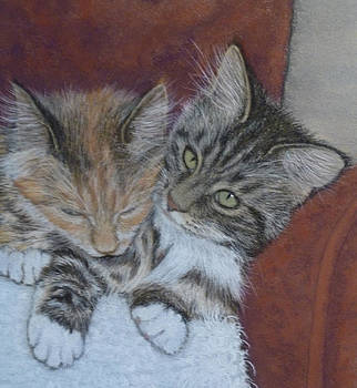 Cosy Cats by Barbara Bird
