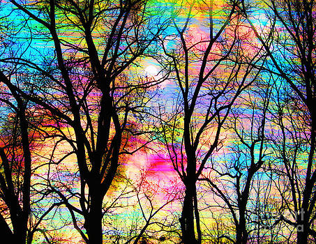 Cotton candy by Gina Signore