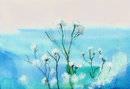 Cotton poppies by Anil Nene