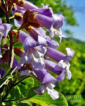 Jeff McJunkin - Cottonwood Blooms