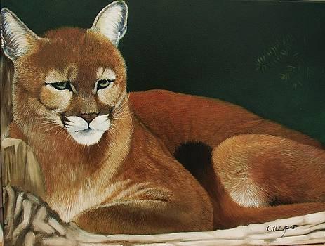 Cougar by Jean Yves Crispo