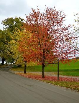 Corinne Rhode - Country Lane