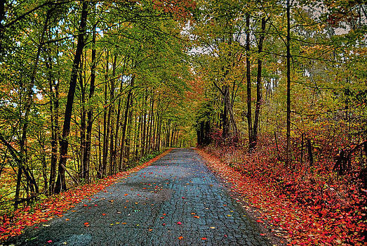 Country Lane in Autumn by Mark Orr