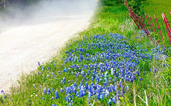 Country Road Bluebonnet Patch by Lorri Crossno