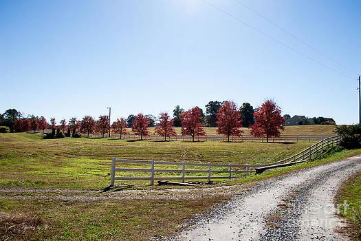Country Roads by Jinx Farmer