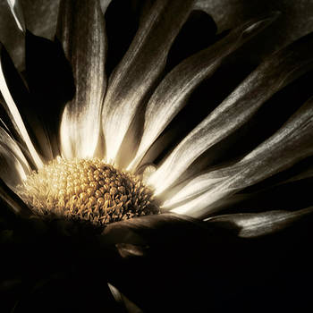 Covenant of the Night by Darlene Kwiatkowski