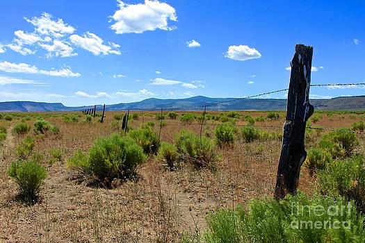 Cowboy Country by Tim Rice