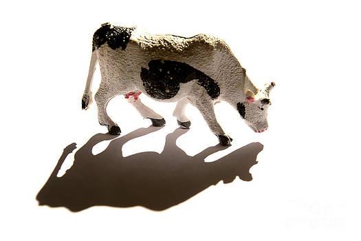BERNARD JAUBERT - Cows figurine