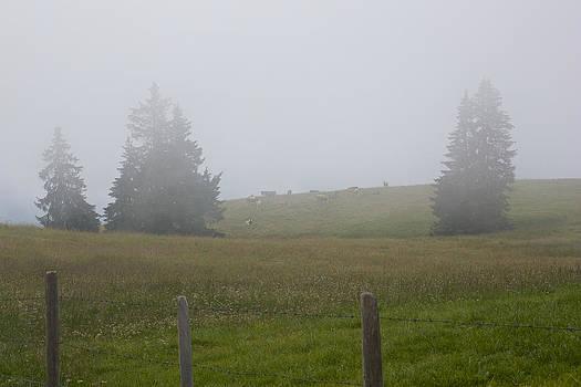 Cows in the Fog by Brady Lane
