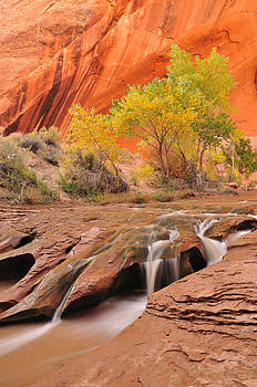 Coyote Gulch Falls by Adam Paashaus