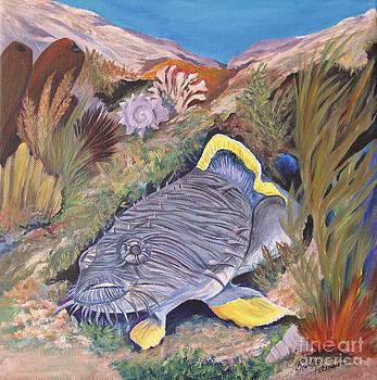 Cozumel Splendid Toadfish by Barbara Petersen
