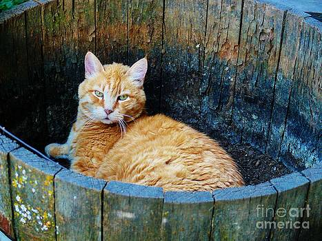 Cozy Country Kitty by Jacquelyn Roberts