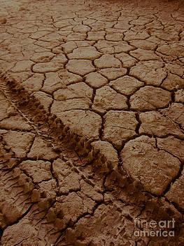 Cracked Tracks by Dan Julien