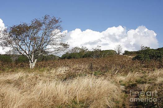 Jonathan Welch - Craggy Gardens 3