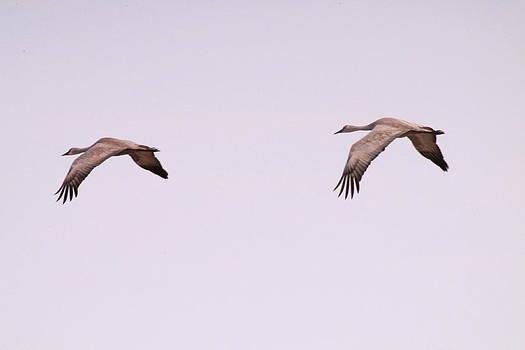 Crane Flight by Alicia Knust