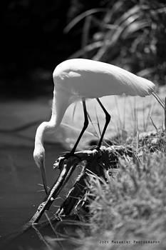 Crane by Joey  Maganini