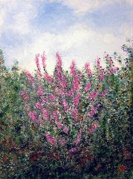 Crape Myrtle by Mr Dill