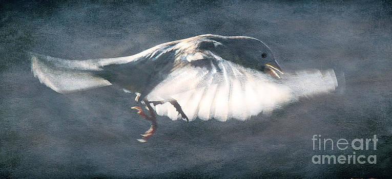 Crawl stroke by Jim Wright
