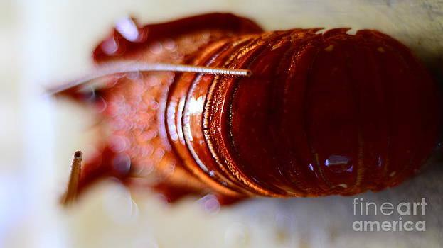 Cray Fish by Bobby Mandal
