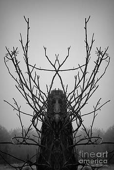 David Gordon - Creature of the Wood BW