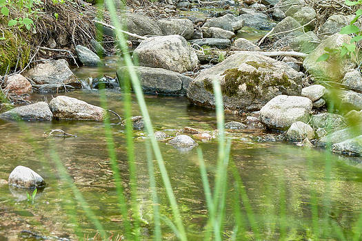 Creek by Brady Lane