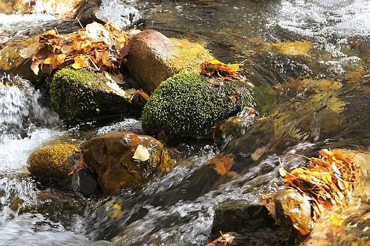 Creek Closeup by David Winge