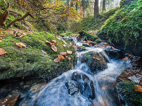 Creek in Autumn - Silberbachtal no16 by Martin Liebermann