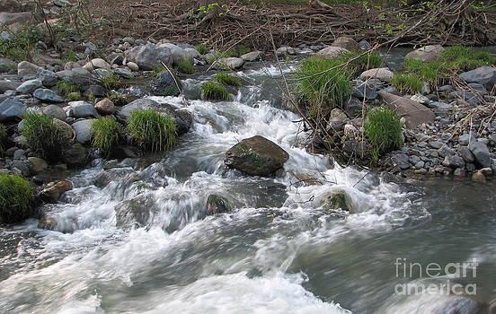 Creek by Matt James