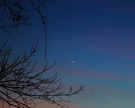Crescent Moon by Alina Skye