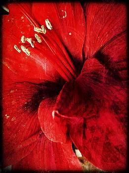 Crimson  by Natalya Karavay