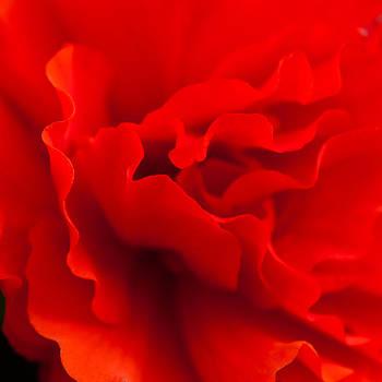 Matt Dobson - Crimson Red