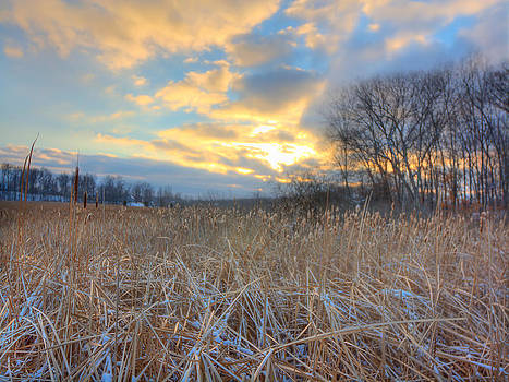 Crooked Lake Willows by Jenny Ellen Photography