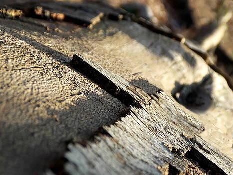 Cross of bark by Chris Cox