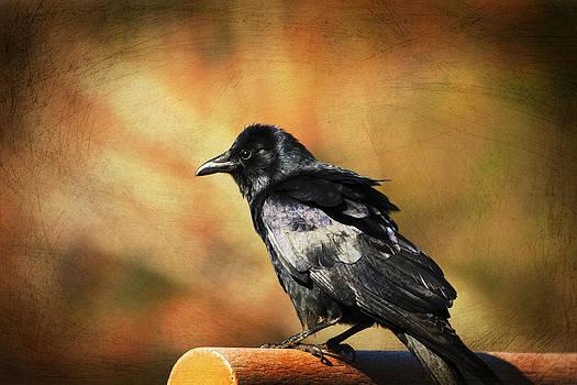 Karol  Livote - Crow Days