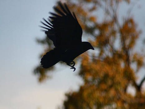 Gothicolors Donna Snyder - Crow In Flight 2