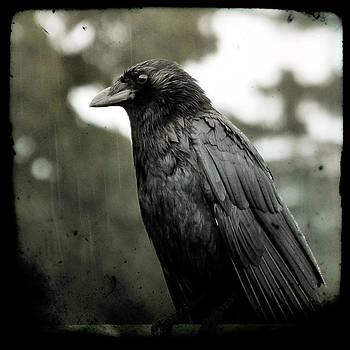 Gothicolors Donna Snyder - Crow In The Summer Rain