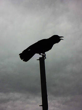Crow by Louis Maistros