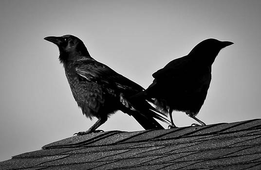 raven chat line Salford, night talk chat line Eden, raven chat line Adur,