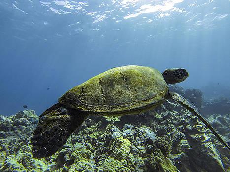 Cruising the Reef by Brad Scott